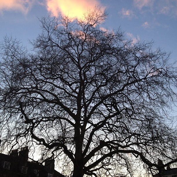 A gorgeous view from town. I thought the tree looked so pretty.