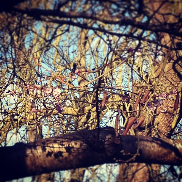One of the first signs of Spring! Blossom on the trees!