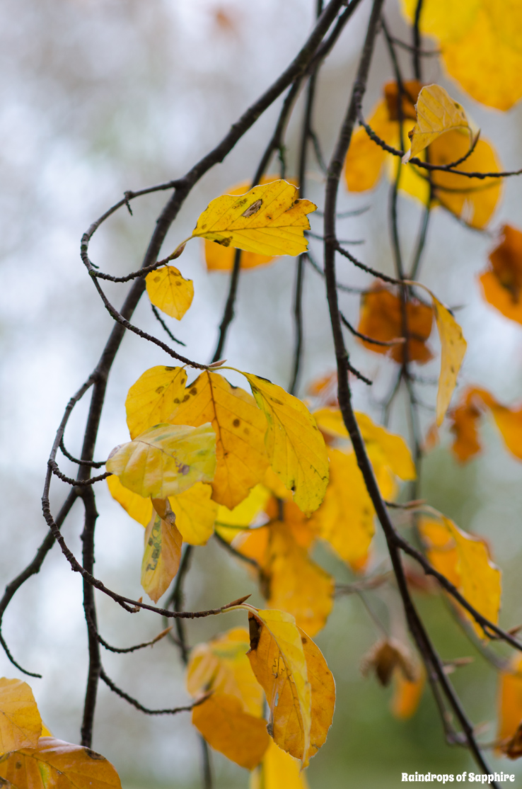 autumn-leaves-branches