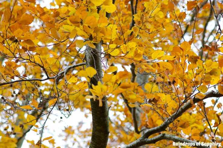 autumn-leaves-on-trees