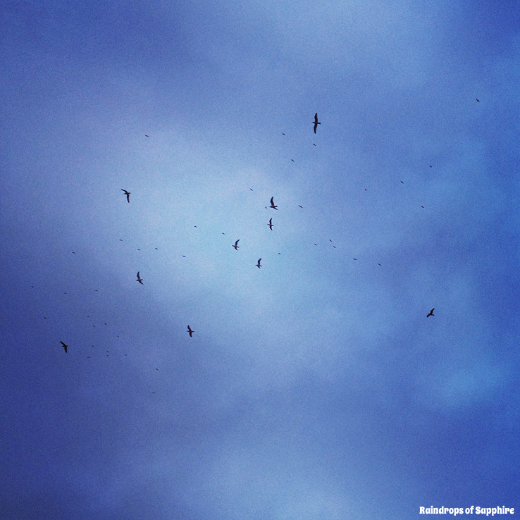 seaguls-in-the-sky