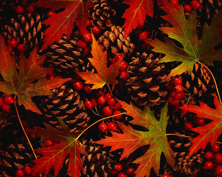 fall-autumn-leaves-berries-cones – Raindrops of Sapphire
