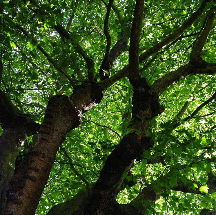 green-tree-photo-upwards