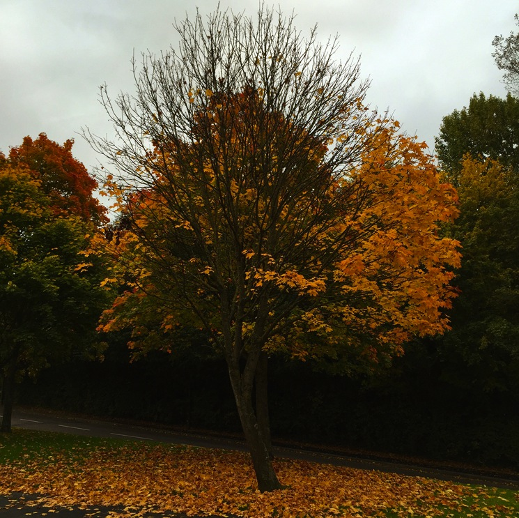 autumn-tree-half-leaves