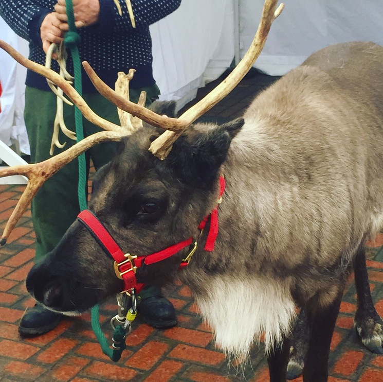 reindeer-swindon