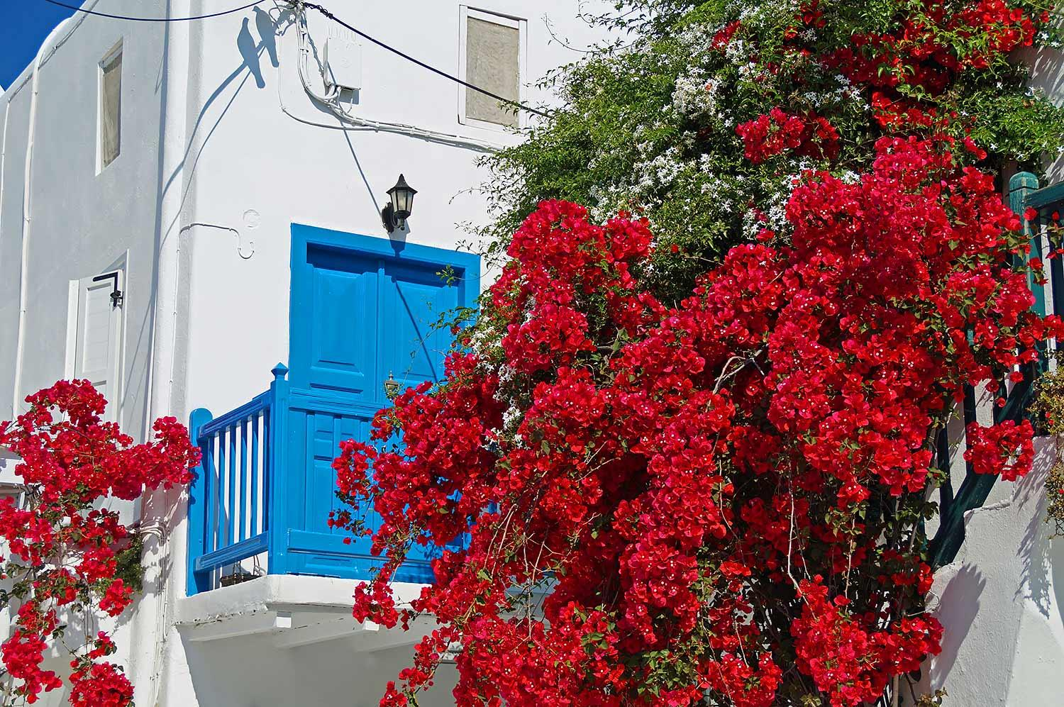 mykonos-greece-flowers